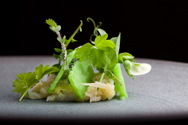 food/sea bass tartare & micro salad