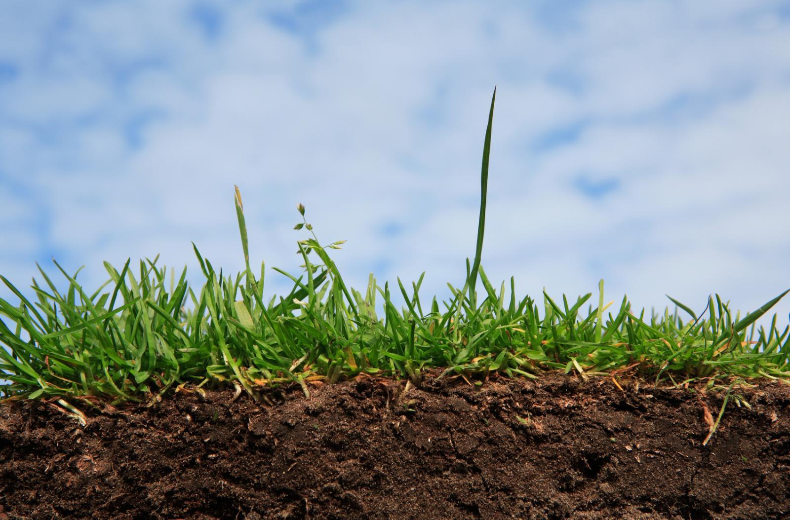 Судебная агротехническая экспертиза
