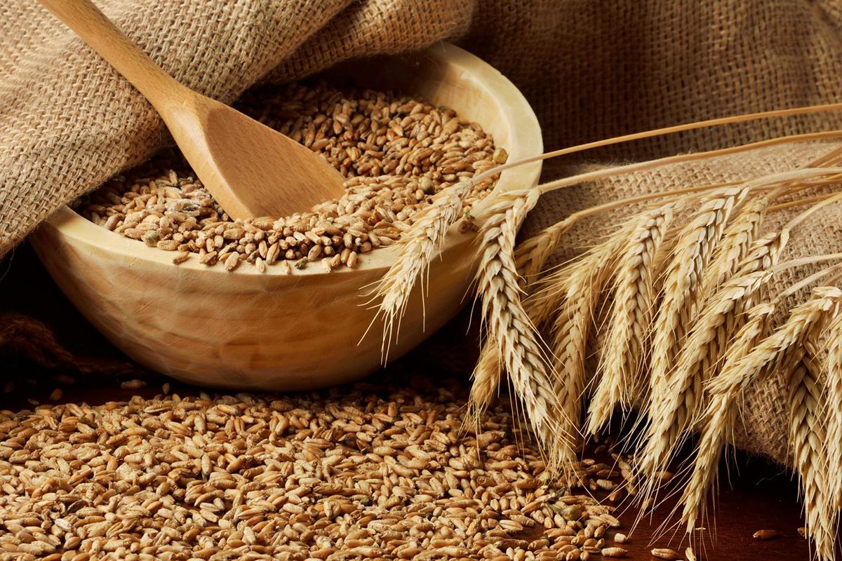 О безопасности зерна Ответственный разработчик: Республика Казахстан (Министерство сельского хозяйства
