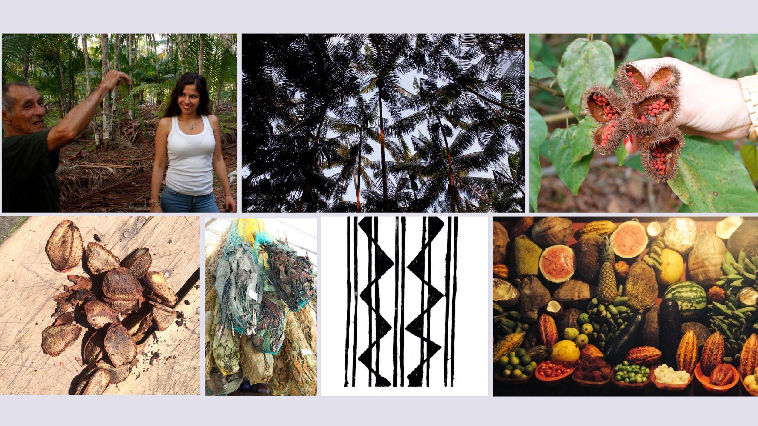 XUA_FantasticForest_AmazonStory.jpg