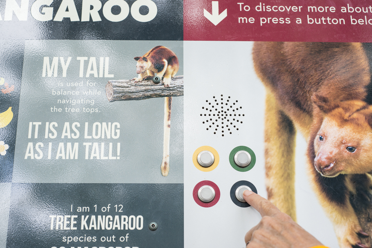 A close up of the interpretive signage showing the tree kangaroo