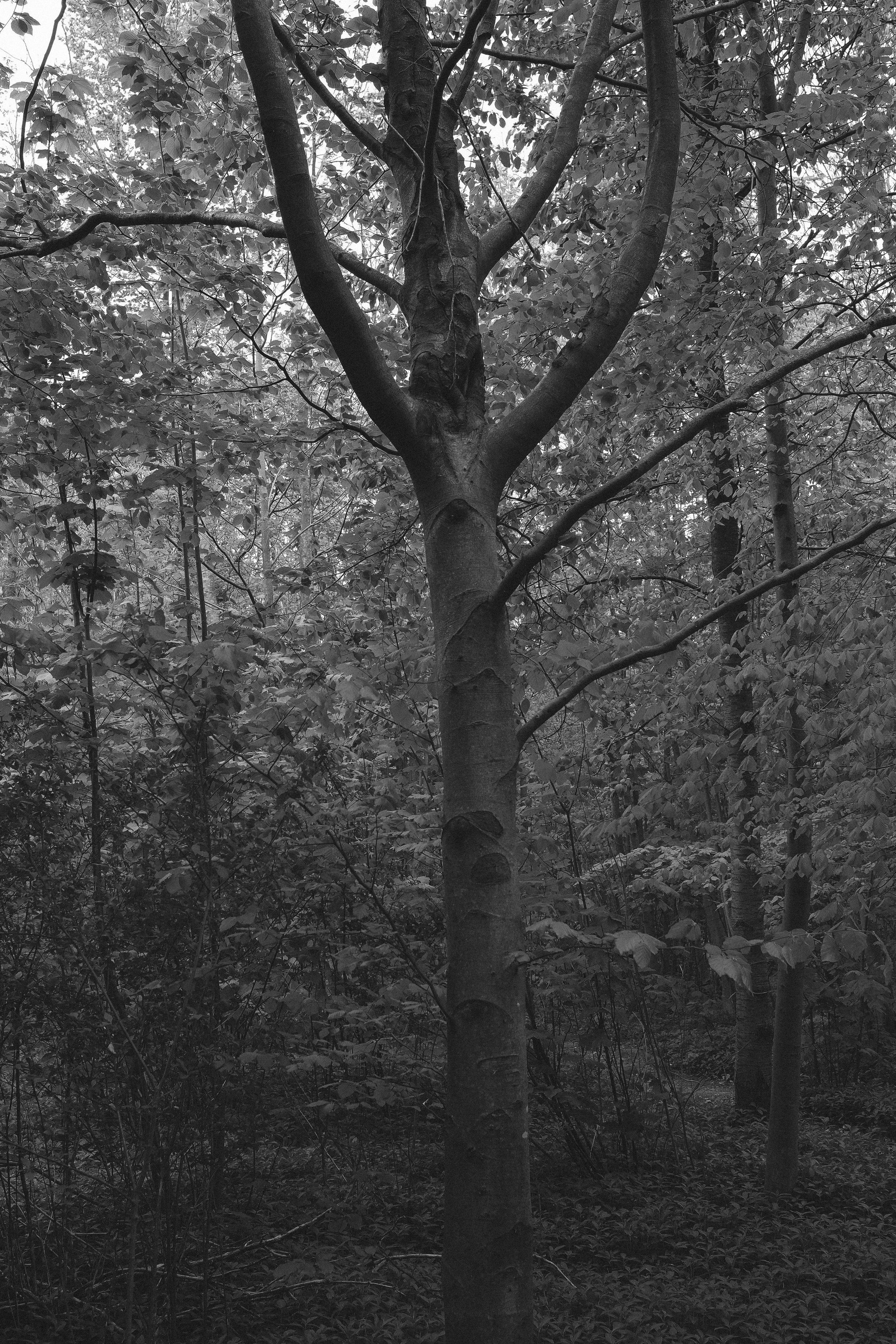 landscape meditations final-3557.jpg