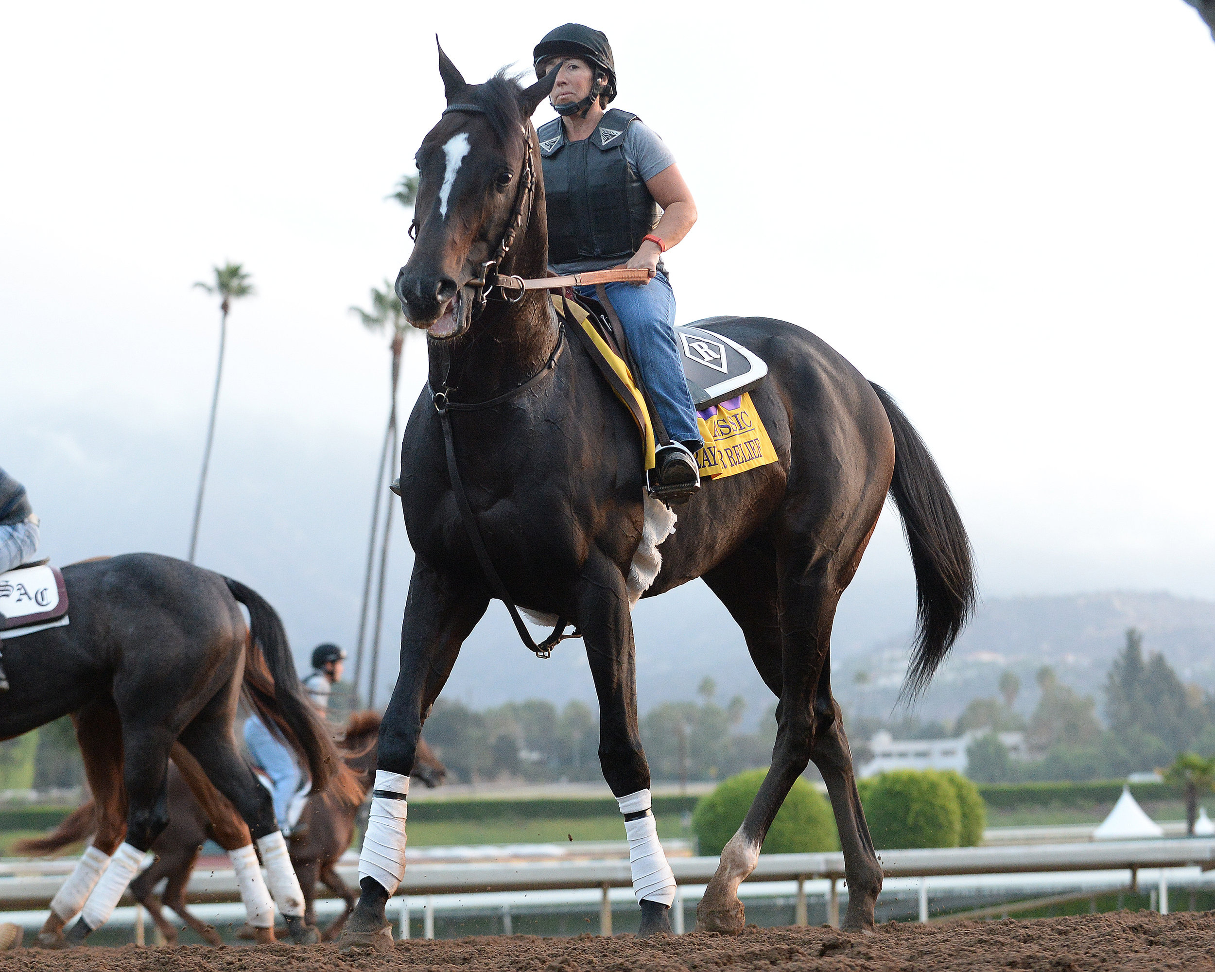 Prayer for Relief was foaled and raised at War Horse Place
