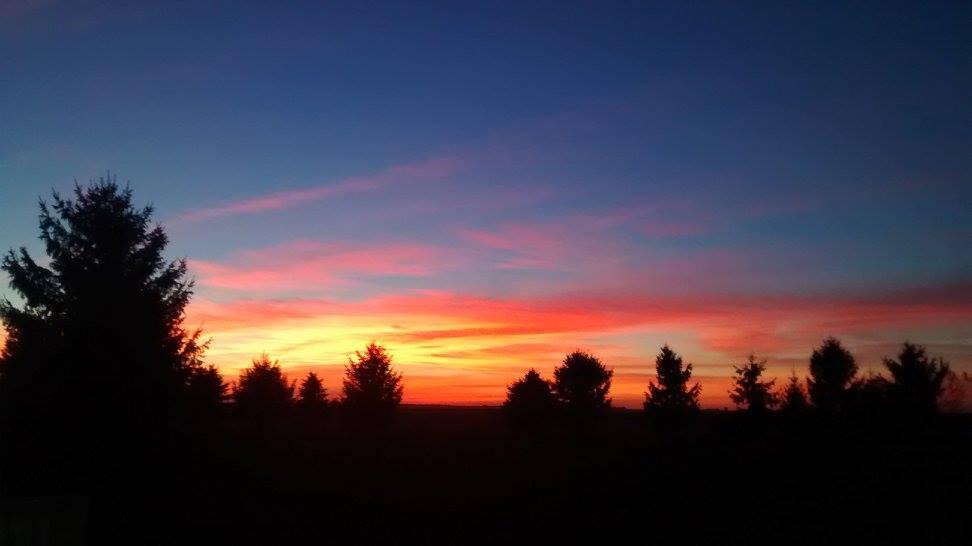 The sun sets on the pastures' windbreak.    (Photo: B. Gioja)