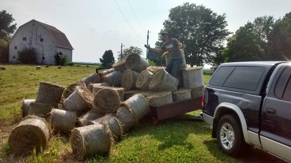 Make hay while the sun shines!    (Photo: B. Gioja)
