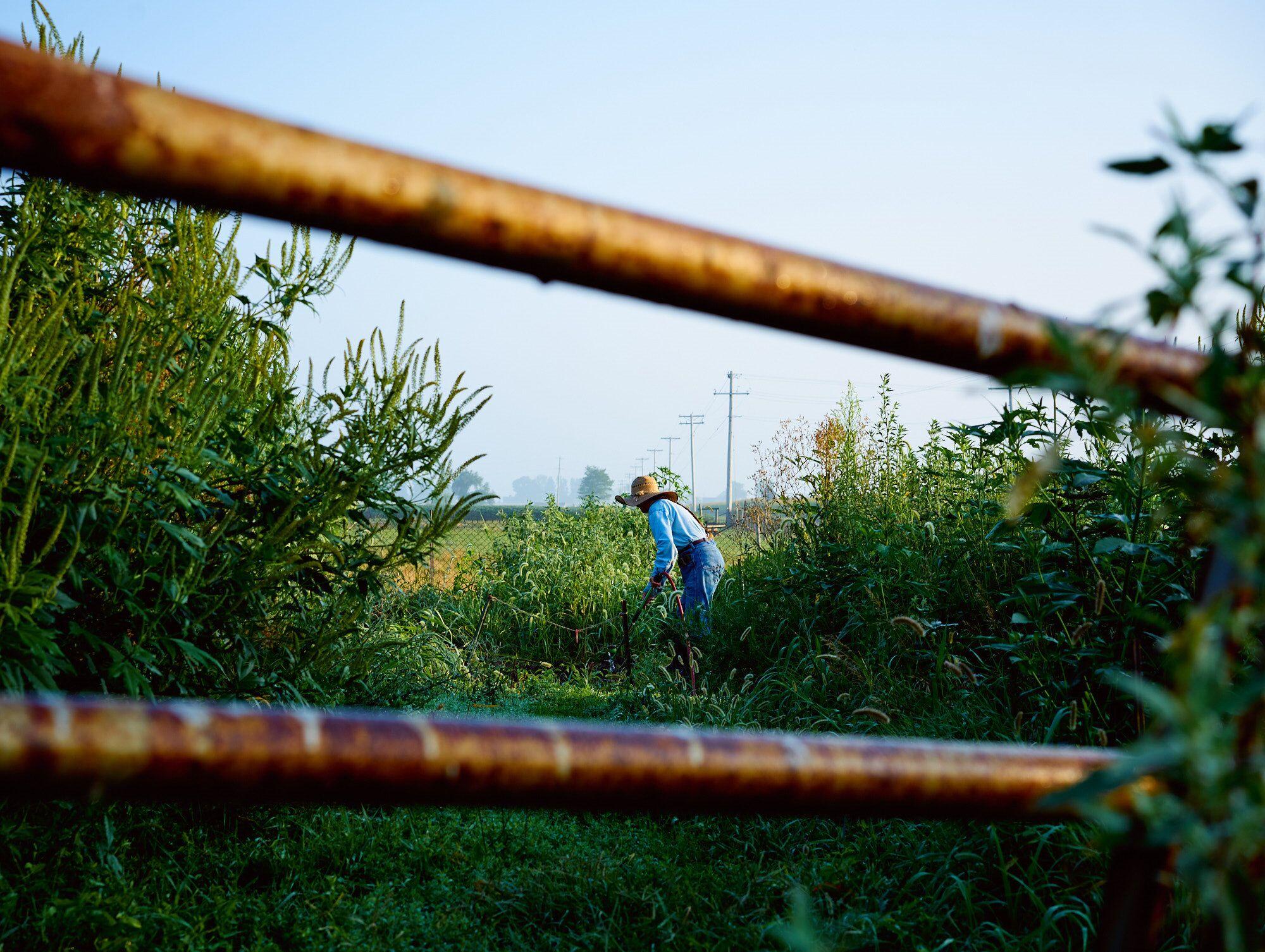 Penny in the farm garden.    (Photo: Samantha Hylla)