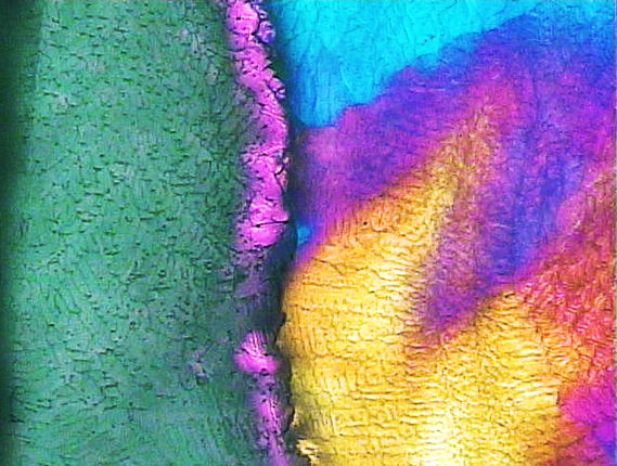 Freeze-dry-microscopy-image-for-lyophilization-cycle-optimization.png