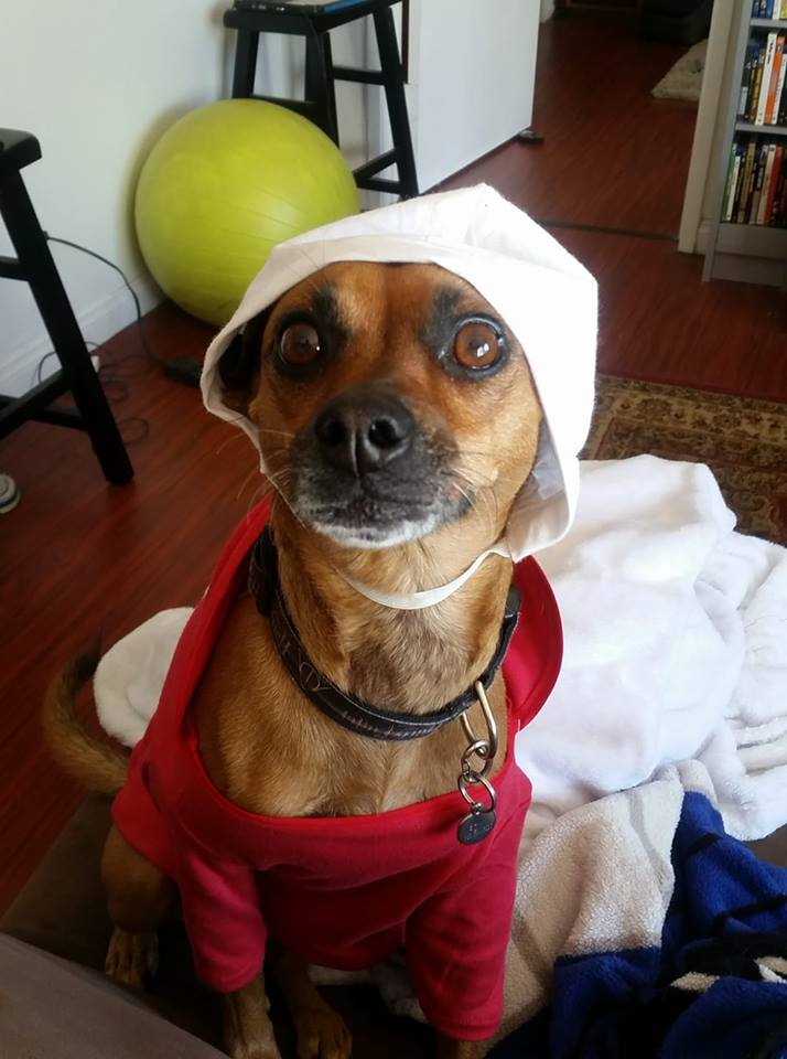 Canine Handmaid