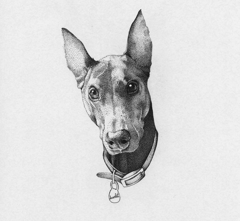 pet-portrait-doberman-illustration.jpg