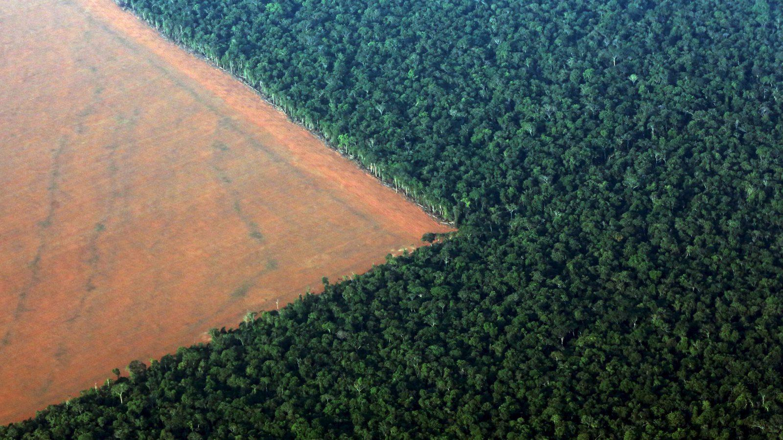 deforestation-amazon-e1480934649492.jpeg