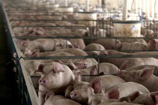 pig_farm_ap.jpg