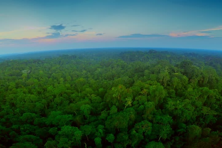 - Forests cover 30% of the earth's land.