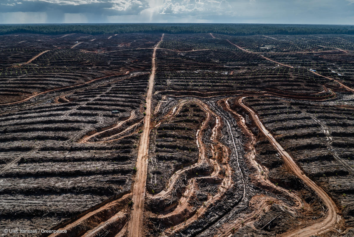 - The rate of deforestation equals to loss of 20 football fields every minute.