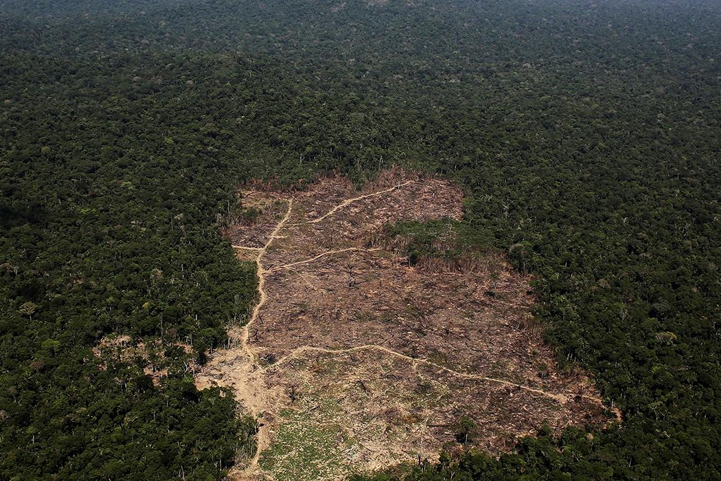 - 25% of cancers fighting organisms are found in the amazon.
