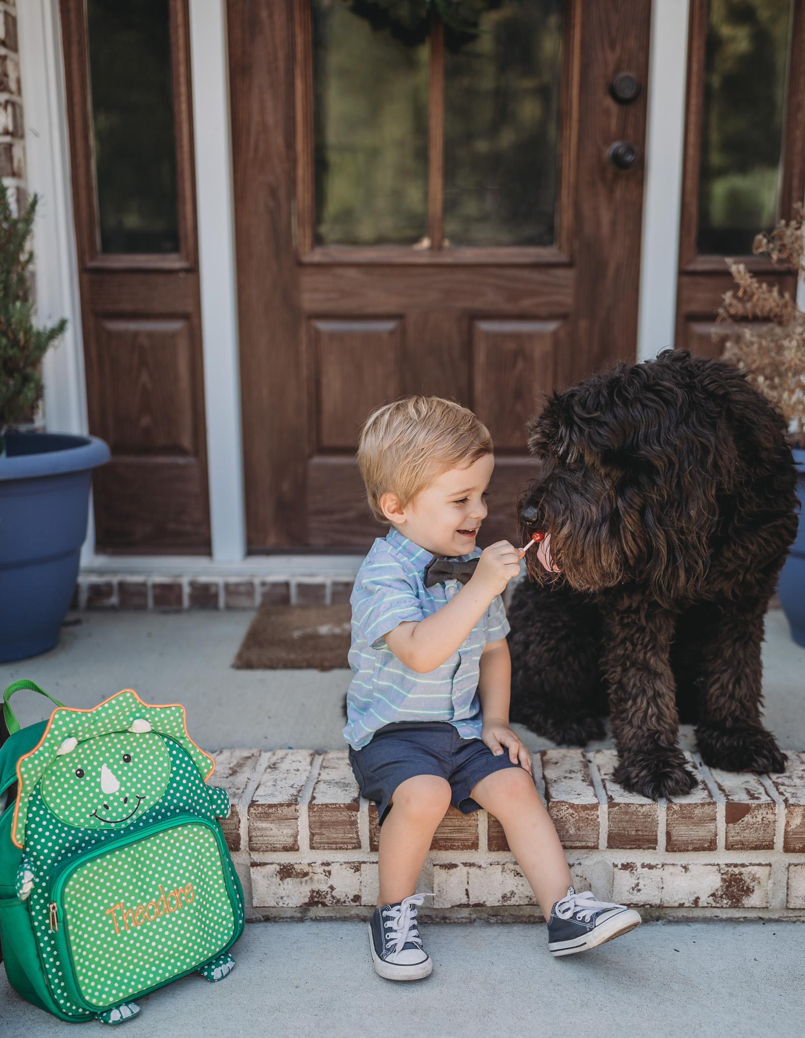 dog wants child snack