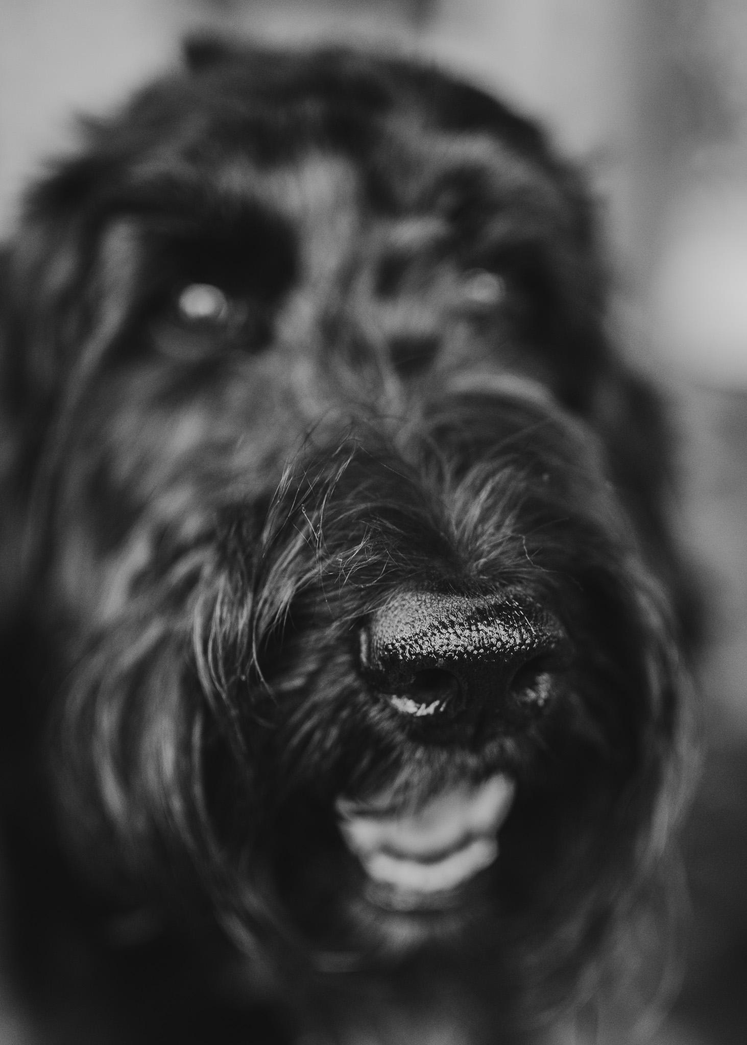 dog nose closeup