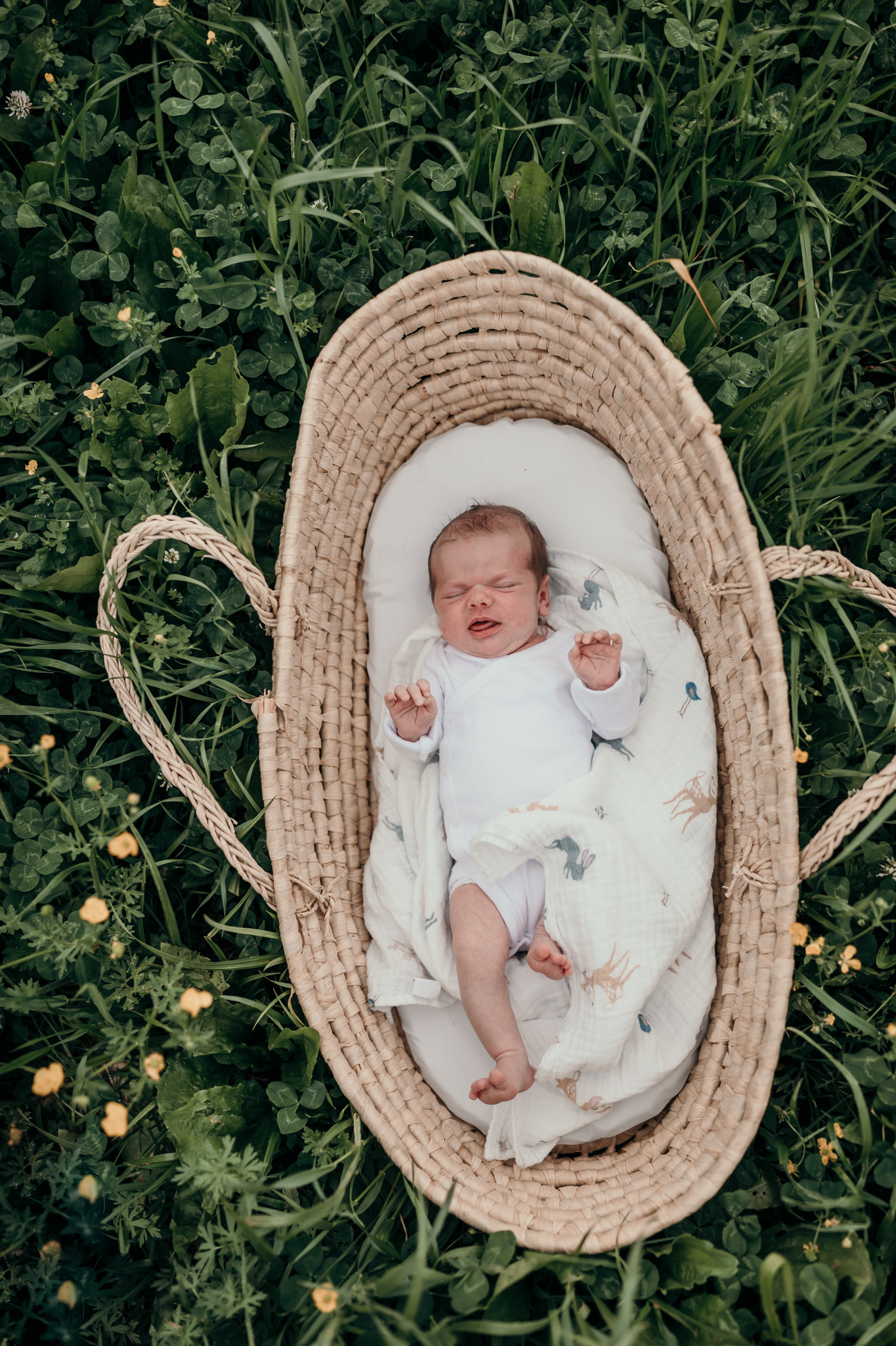 baby in Moses basket newborn