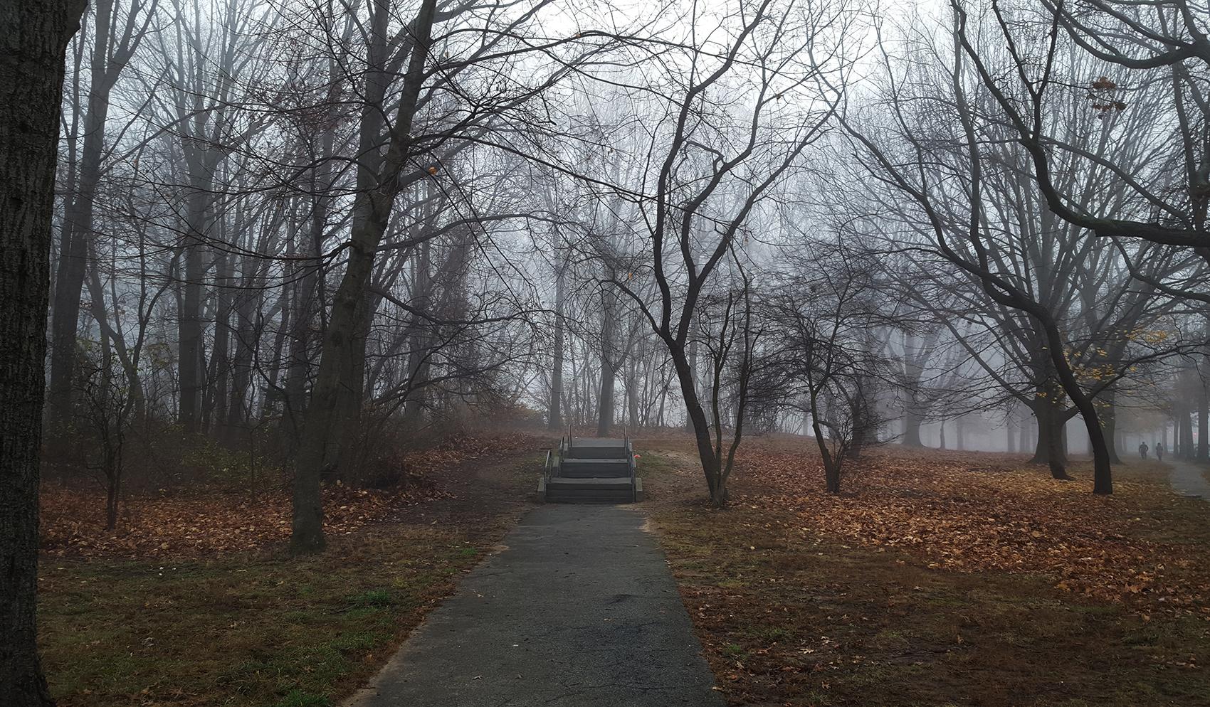 a foggy entrance