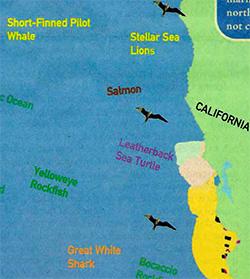 CALIFORNIA THUMB.jpg