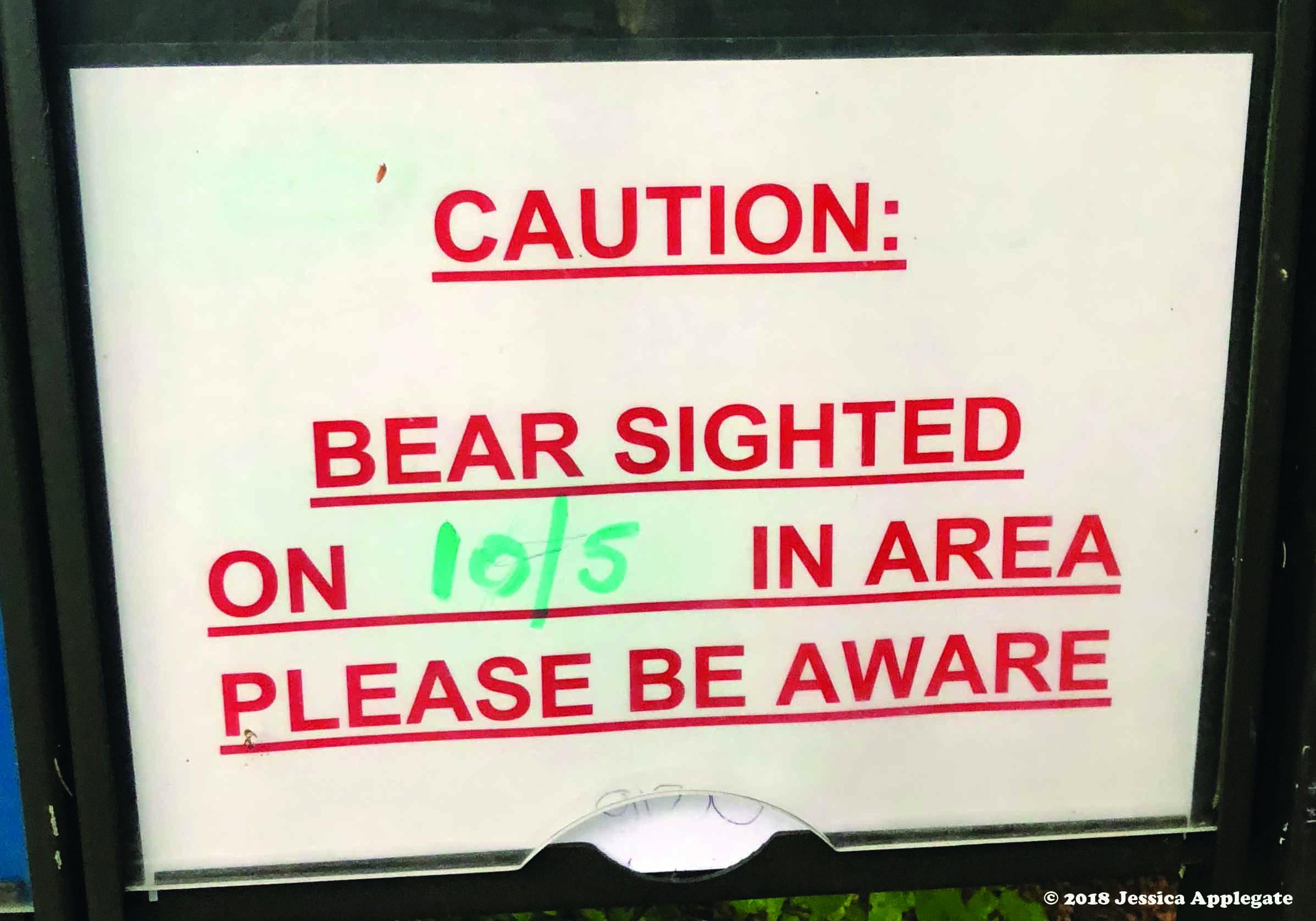 A recent bear sighting near Sitka.