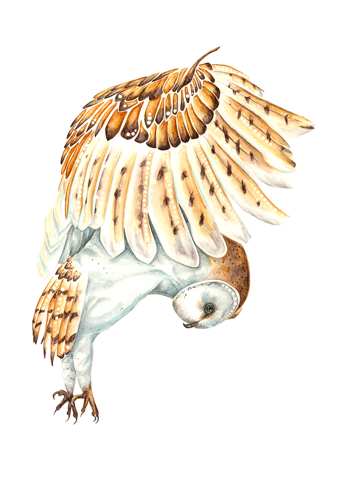 Barn Owl  | Watercolour