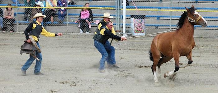 WILD HORSE RACE -