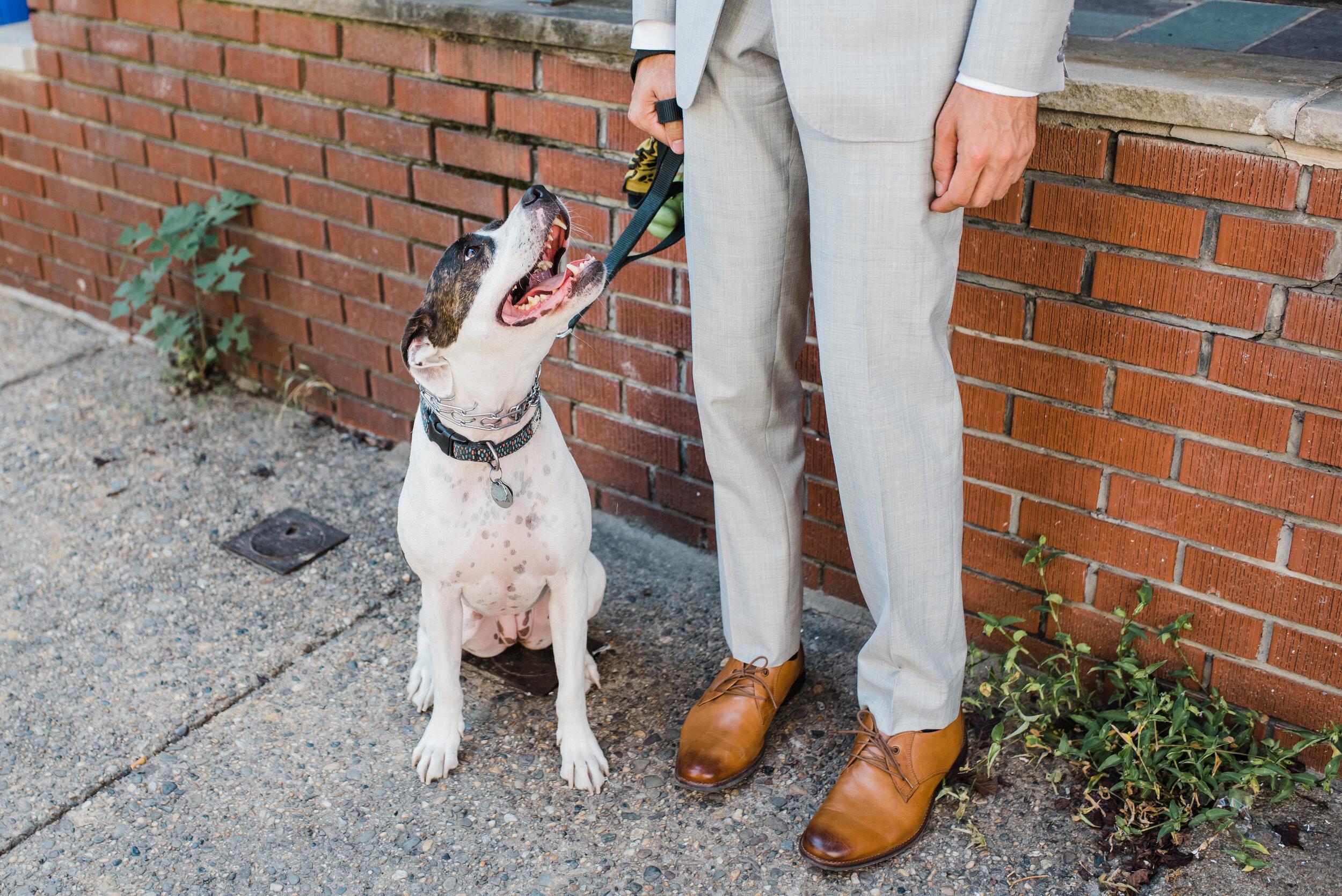 Dog portraits on a wedding day