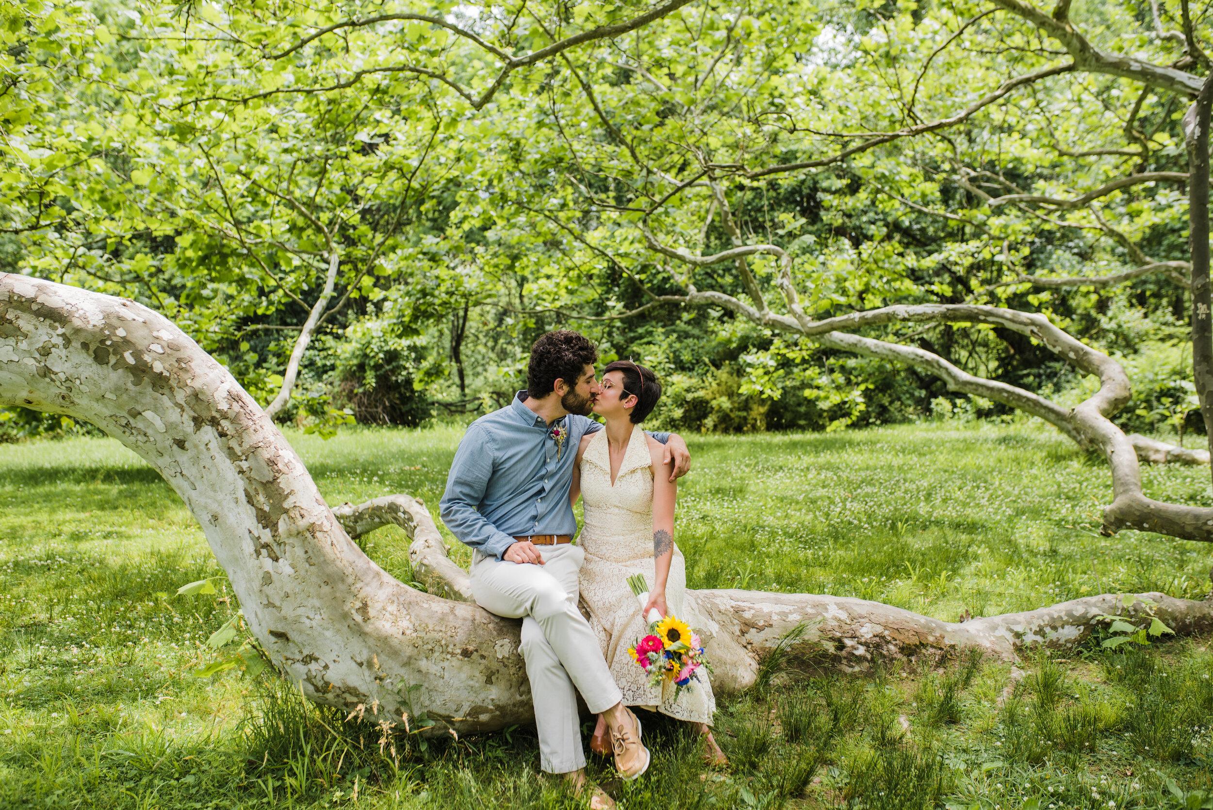 Wedding couple sitting on a large tree.