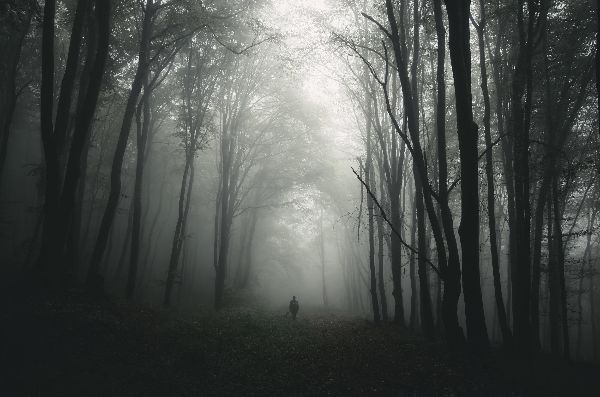 man-silhouette-in-haunted-forest-K83C75N.jpg