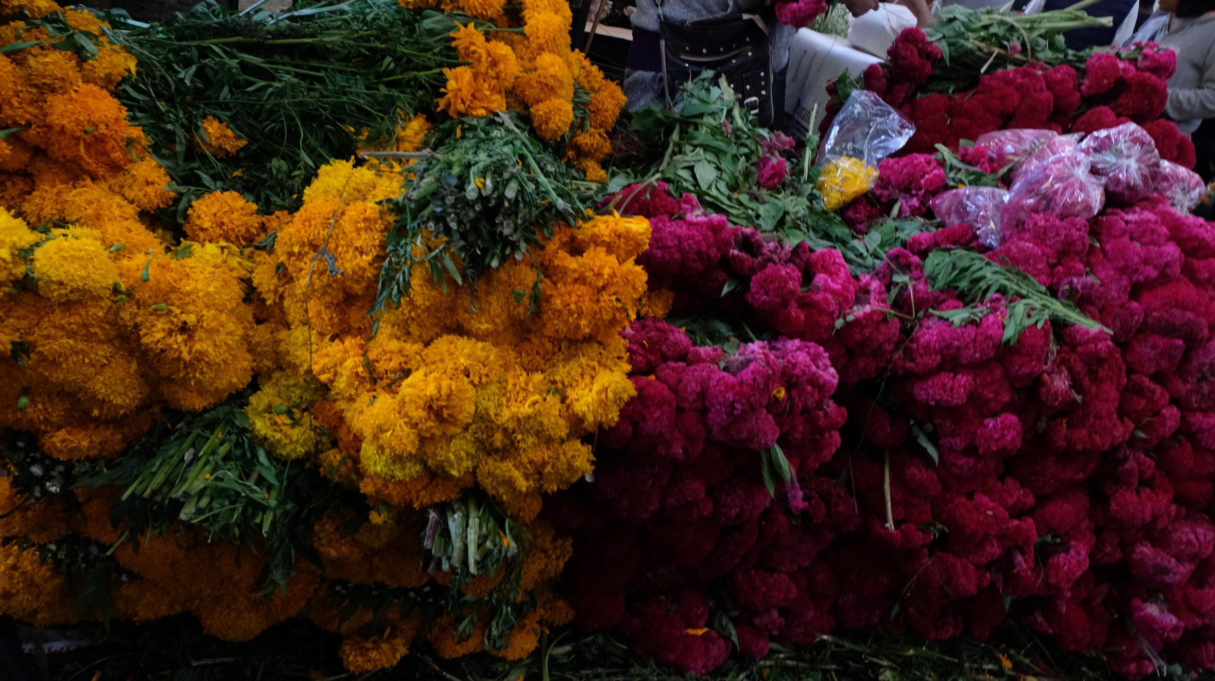 Left: Cempasuchiles (Mexican marigold) Right: Pata de Leon (Cockscomb)