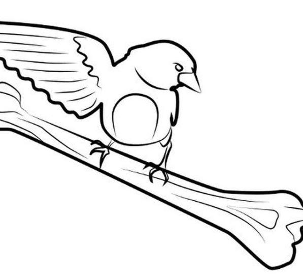 logo darwin finch