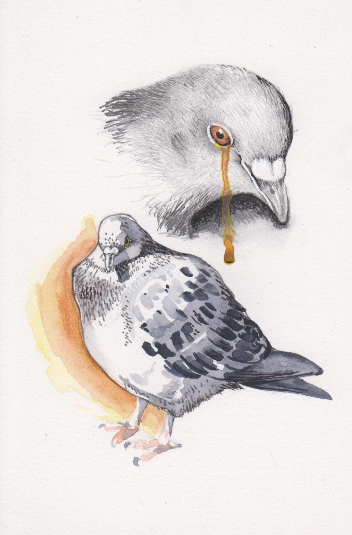 Pigeon 5.jpg