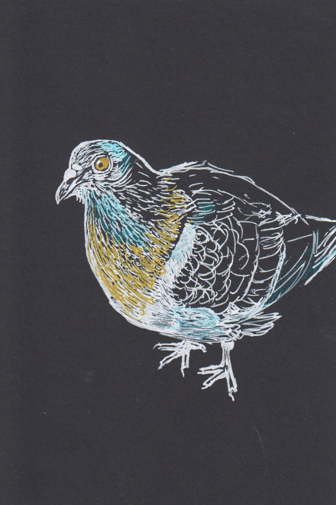 Pigeon 4.jpg