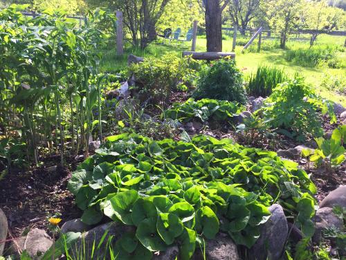 spiral garden.jpg