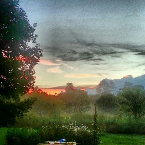 backyard mist.jpg
