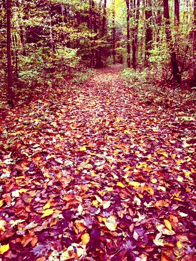 tick country and leaves.jpg