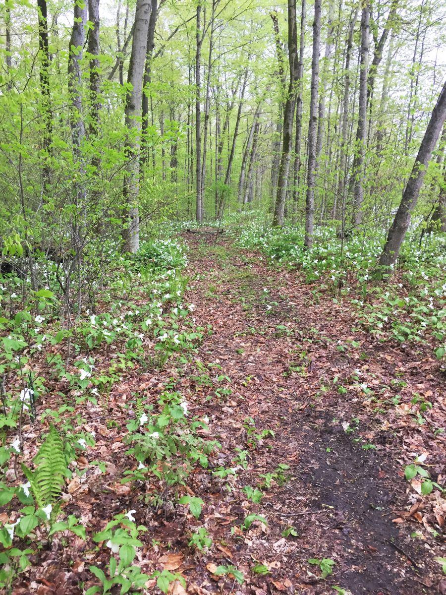 forest in spring.jpg