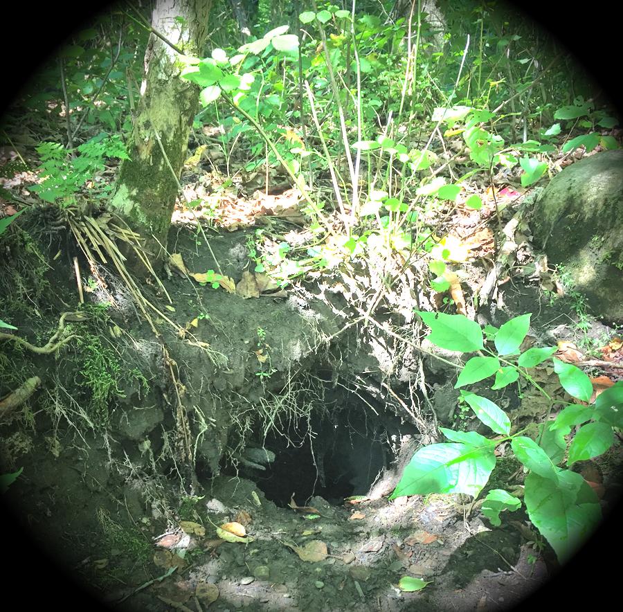 fox hole.jpg