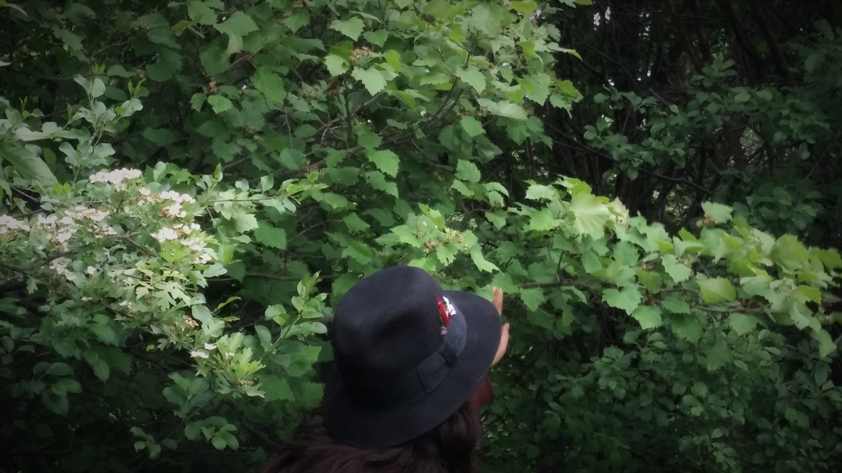 me with hat and bushes.jpg
