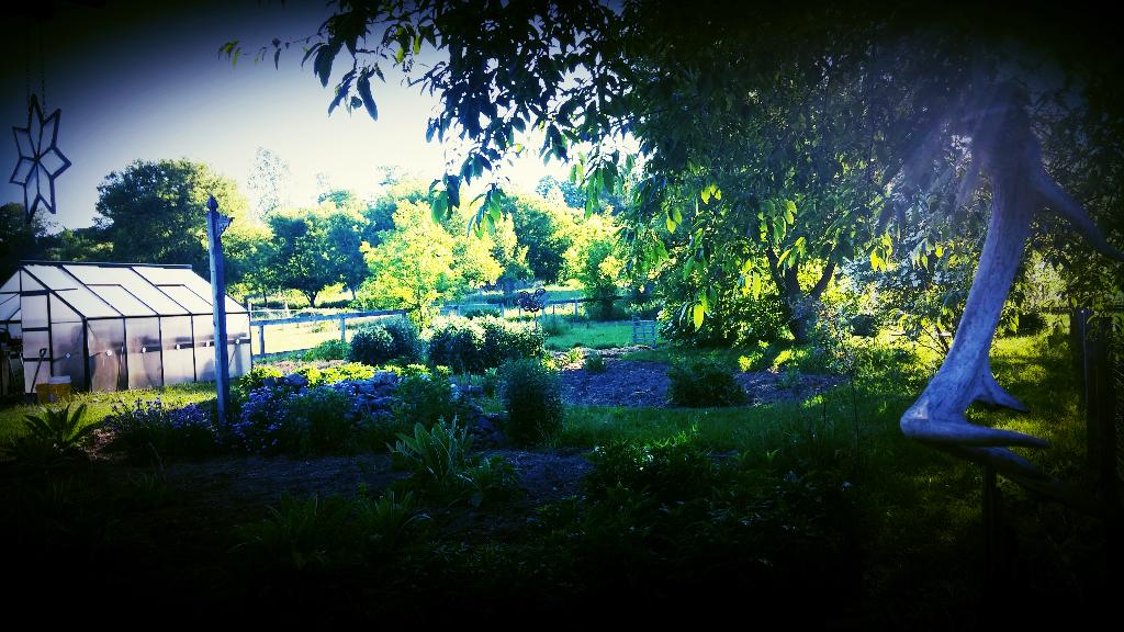my garden.png