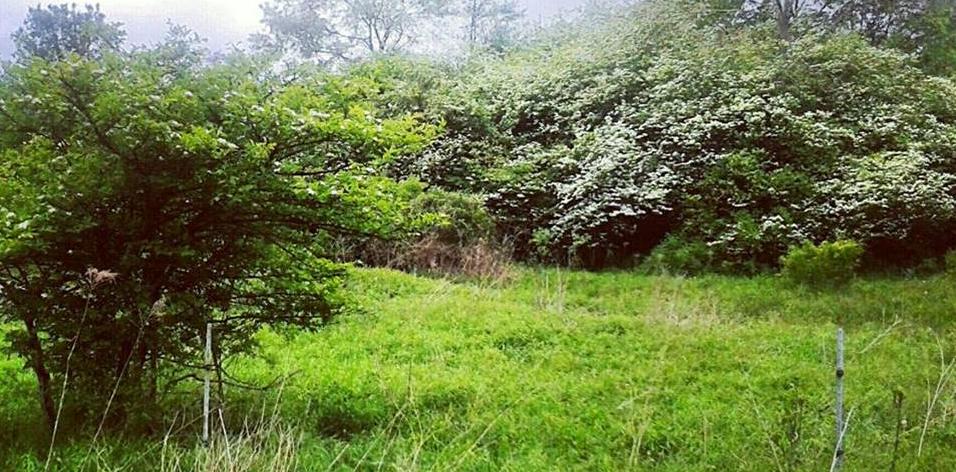 hawthorne hill cropped.jpg