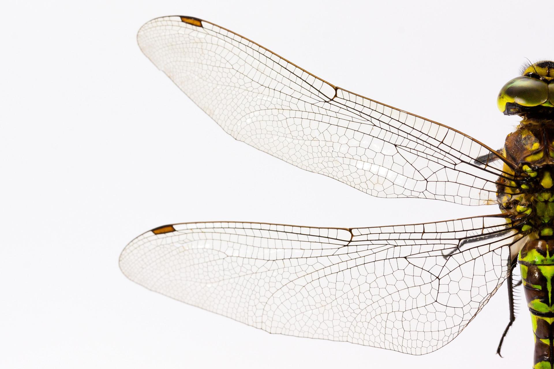 dragonfly-867888_1920.jpg