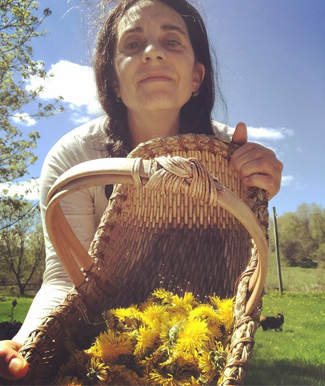 Don't worry I tell ya Dandelions will save the world 😊🖤✨ . . . #gathering #hedgewitch #wortcunning #dandelionflower #blossoms #plantmagick