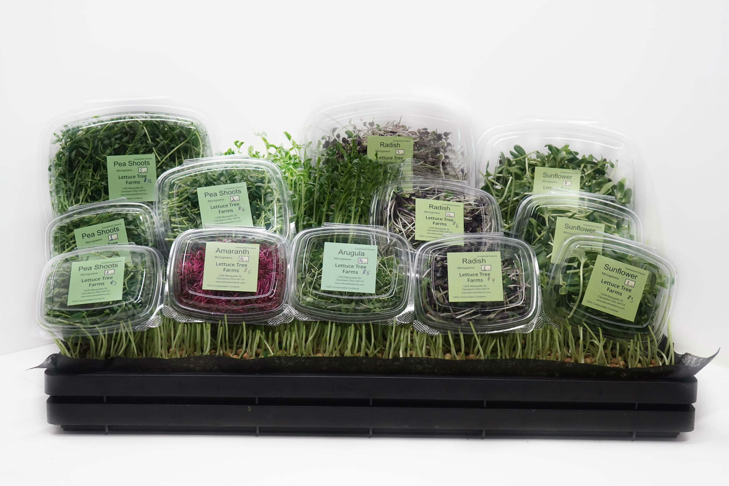 Get your Microgreens today in either compostable clamshells or by the full flat!