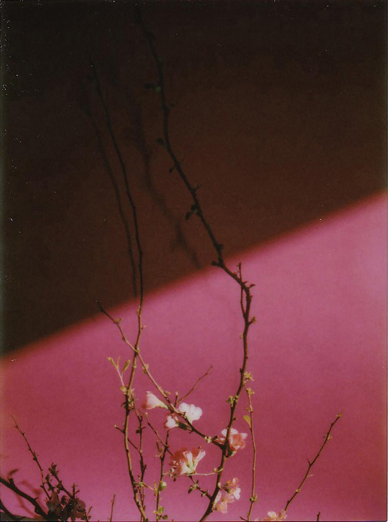 036-icon-artist-management-Kristin-Vicari-Girls and Flowers-36.jpg