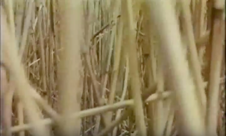 swamp1.jpeg