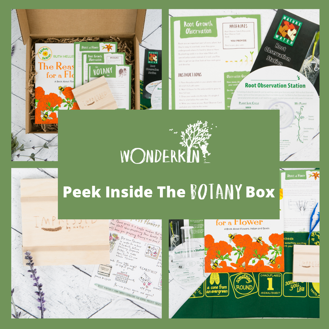 Peek Inside the Wonderkin Botany Box -- Our educational subscription boxes are designed to support early childhood development by getting kids outdoors and connected to nature.