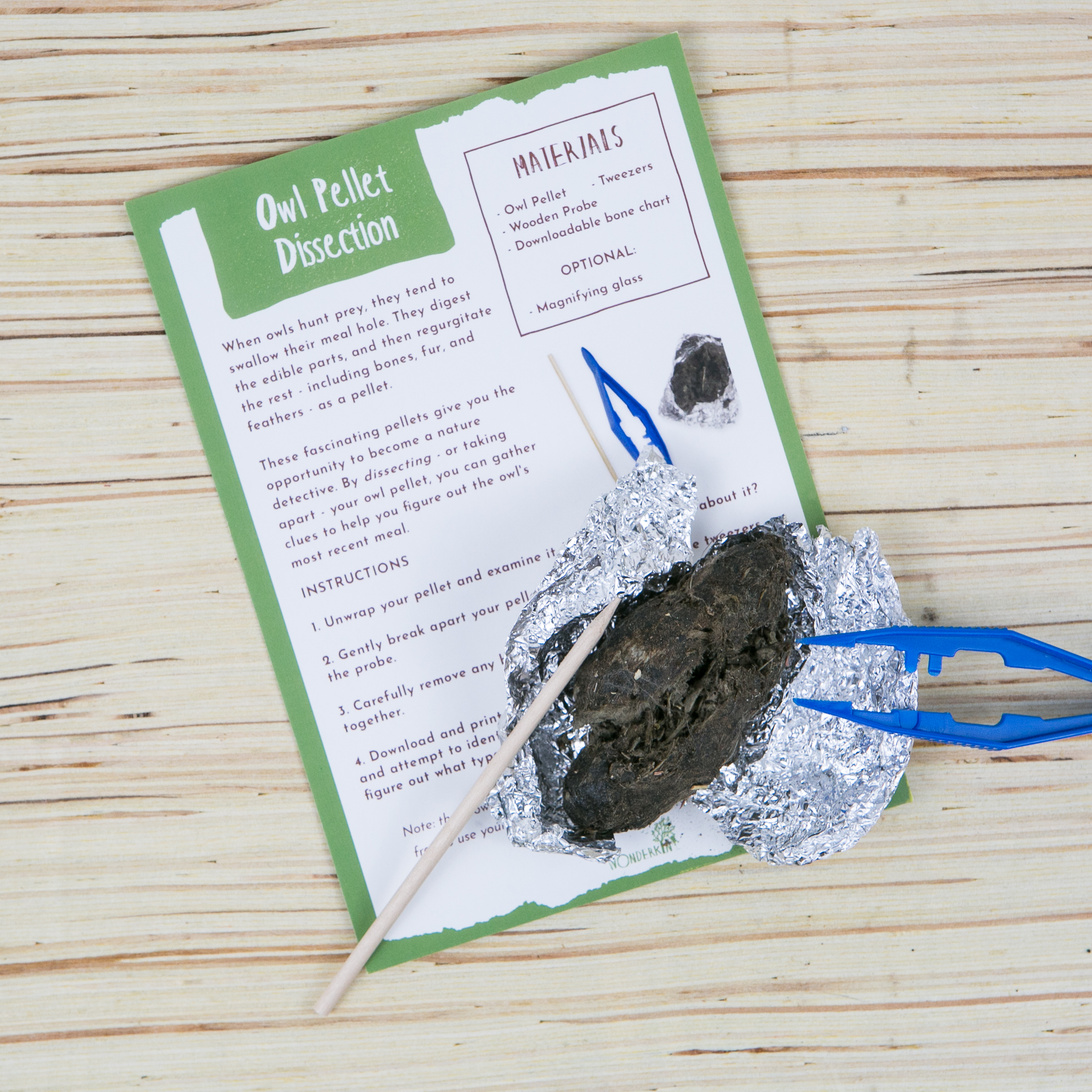 Owl pellet dissection kit, featured in the Wonderkin Owl Box