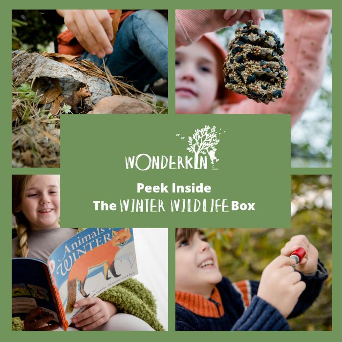 Peek Inside the Winter Wildlife Box |  Wonderkin