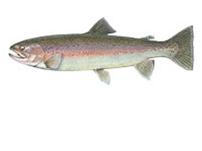 Fish-tiles-RAINBOW.jpg